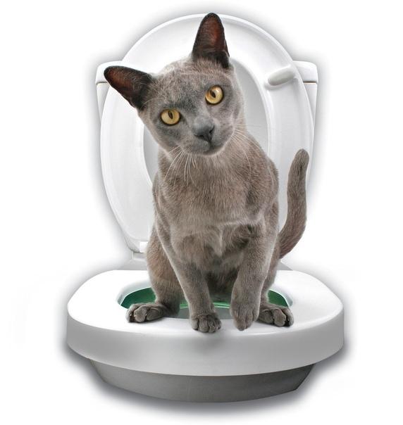 Тренажер туалет для приучения кота и кошки к унитазу